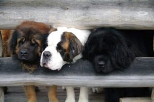 koiria